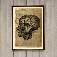 Head anatomy poster Medical illustration Vintage decor