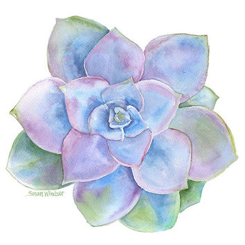 Blue Succulent Watercolor Painting  8 x 10  Giclee Print