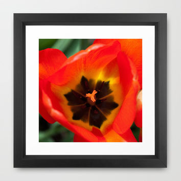 Anatomy of a Tulip, Orange Framed Art Print by Legends of Darkness Photography