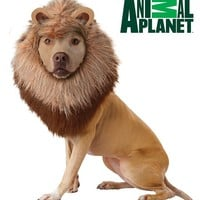 Lion Pet Costume