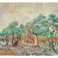 The Olive Grove, 1889 Giclee Print by Vincent van Gogh at Art.com