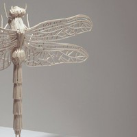 Matchstick Insects | Kyle Bean