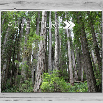 Adventure Inspirational Quote Photo, California Redwoods Photography Nature Photograph, green,…