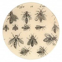 Crabrones Insect Plate