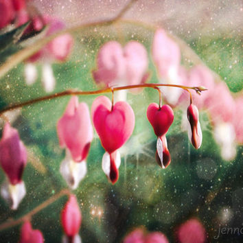 The Healing Heart - PHOTO, bleeding hearts flowers, flower photography, dreamy romantic home decor, for her, botanical print