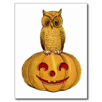 Little Owl Pumpkin Halloween Postcard