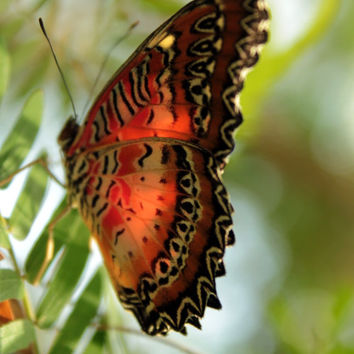 nature photography butterfly wall decor nature art wildlife art butterfly print art photography…