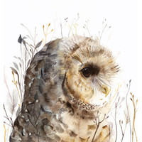 Owl watercolor art- Spotted Owl -print after original watercolor