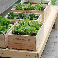 diy: wine box vegetable garden | the style files