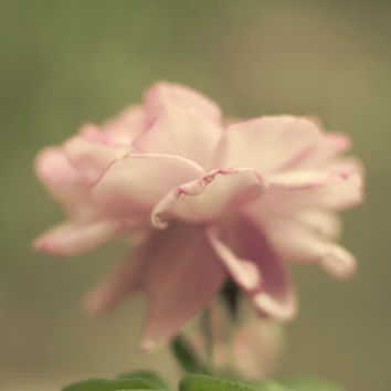 Fine Art Photograph- Shabby Chic Romantic Poetic Lavender Rose - Home Decor 8 x 10