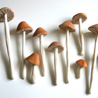 Edible Wild Sugar Mushrooms of the genus by andiespecialtysweets