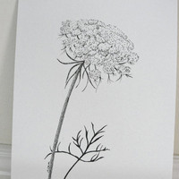 Original Ink Drawing, Queen Anne's Lace, Summer Flower, Wild Carrot, Summer Wildflower, Black and White Illustration 8 x 10