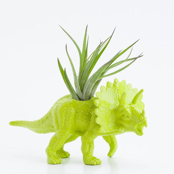 Small Dinosaur Planter with Air Plant Room Decor, College Dorm Ornament Plants and Edibles