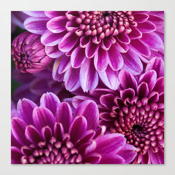 Mums Canvas Print by Legends of Darkness Photography