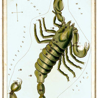 Scorpio Zodiac Sign Art Astrology Astronomy Constellation 8 1/2 x 11 Color Glossy Print