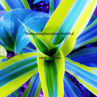 Blue Green Two Toned Abstract plant photograph. Wall Art, Home Decor. Taken with a 12.1 Megapixel Canon Camera 35X Optical Zoom.