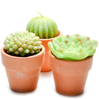 Potted Succulent Candle Set | LEIF