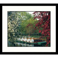 Great American Picture Boston Swan Boats Framed Photograph - BOS100