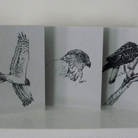 Bird Art Cards Hawks Red Tailed Harrier Sharp Shinned Gray Neutral All Occasion Blank Cards Set of 6