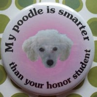 my poodle is smarter than your honor student by thedogcoatlady