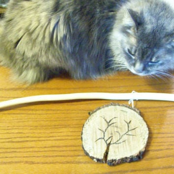 Magic Wand Rustic Wildcrafted Mimosa Wood
