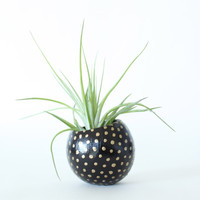 Air Plant Planter with Air Plant - Black & Gold Spots