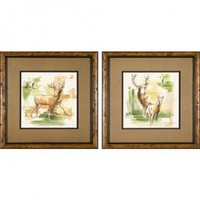 Phoenix Galleries White Tail Framed Prints - White Tail Series