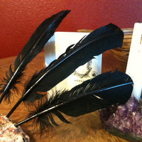 Black Feather Pen