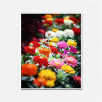 Flower Photography Vibrant Zinnia Garden Pink Orange Red Yellow White Flowers Floral Botanical Bright Home Decor - 8x10 - Flower Pictures.
