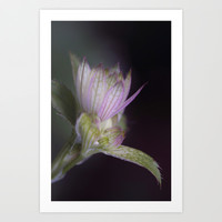 Star bloom Art Print by LoRo  Art & Pictures