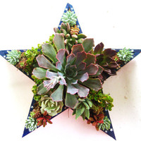 Succulent Star Centerpiece Perfect Gift or Home Decor