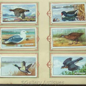 British Birds Full Set of 48 Original Cigarette Cards in Official (Park Drive) Album by Gallaher Ltd Issued in 1937 (ref: 3091)