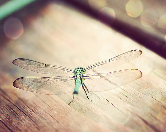 dragonfly photo, peridot, mint, green, turquoise, boho decor, teal, brown, beige, earthy nature, rustic farmhouse, dragonfly  decor