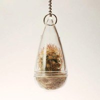 Real Living Tiny Texas Windowsill Cactus Plant Necklace with Ballchain