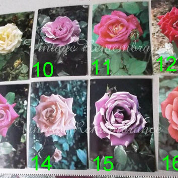 Rose Photography Vintage Soviet USSR Flower Roses Postcard Unsigned Unmailed Collectible