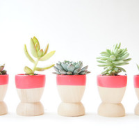 Mini Planters set of 5, Neon Pink