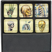 X-Ray Anatomy Skeletal Magnet Set