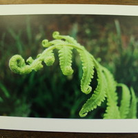 Fern leaf note card