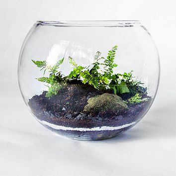 terrarium glass terrarium apothecary from ratinmykitchen on. Black Bedroom Furniture Sets. Home Design Ideas