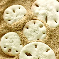 Bakery Ideas / Sand dollar cookies on a bed of brown sugar! (with recipe  tutorial)