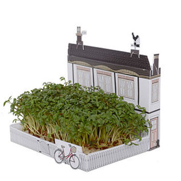 Mini Growing Garden Kits Village Set