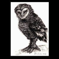 Owl ACEO Original Graphite Pencil Drawing 3.5 x 2.5 inch - Ready To Ship