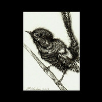 Bird ACEO Original Graphite Pencil Drawing 3.5 x 2.5 inch - Ready To Ship
