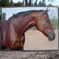 Bay Horse Head Shoulders Picture Card