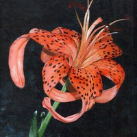 A Blooming Tiger Lilly, Original Ac.. on Luulla