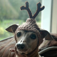 Dog hat - REINDEER - Christmas pet hat - Humorous - 2 to 20 lb pets