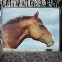 Chestnut Horse Head Against Sky Photo Card