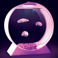 Jellyfish Tank | Uncrate