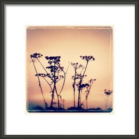 Poetry Surrounds Us Everywhere - Framed Print By Alexandra Cook