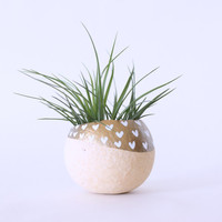 Air Plant Planter with Air Plant - Natural, Gold with White Hearts.